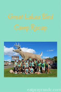 Great Lakes Bird Camp